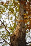 ninho das vespas em uma árvore imagem de stock royalty free