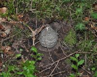 Ninho das vespas no assoalho da floresta imagens de stock royalty free
