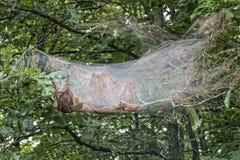 Ninho de Bagworm Fotos de Stock