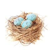 Ninho de ovos de Easter Fotografia de Stock