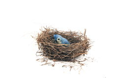 Ninho do pássaro Fotos de Stock Royalty Free