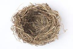 ninho do pássaro Imagens de Stock