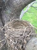 Ninho do pássaro Fotografia de Stock Royalty Free