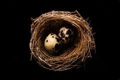 Ninho do pássaro com dois ovos Fotos de Stock Royalty Free
