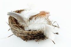 Ninho do pássaro com penas Imagens de Stock