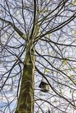 Ninho do pássaro em ramos de árvore fotografia de stock