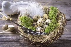 Ninho do pássaro em uma tabela com ovos e pena fotografia de stock