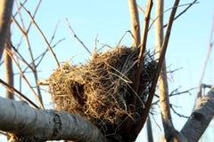 Ninho do pássaro na árvore fotografia de stock royalty free