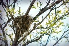 Ninho do pássaro na mola Fotografia de Stock Royalty Free