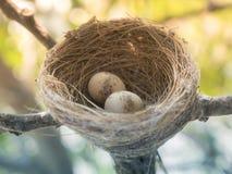 Ninho do pássaro no ramo com os ovos da páscoa para a Páscoa Fotos de Stock Royalty Free