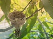 Ninho do pássaro no ramo com os ovos da páscoa para a Páscoa Fotografia de Stock Royalty Free