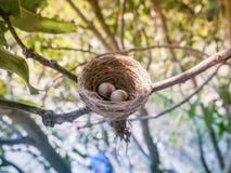 Ninho do pássaro no ramo com ovos da páscoa Imagens de Stock