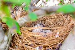 Ninho do pássaro no ramo de árvore Fotos de Stock
