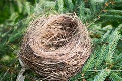 Ninho do pássaro vazio Fotografia de Stock Royalty Free