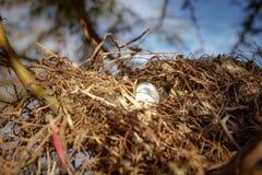 Ninho do `s do pássaro Foto de Stock