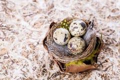 Ninho dos ovos de codorniz Imagem de Stock Royalty Free