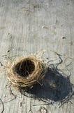 Ninho dos pássaros fotografia de stock