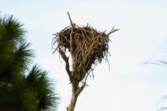 Ninho dos pássaros construído na árvore inoperante fotografia de stock