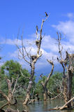 Ninho dos pássaros em árvores inoperantes Imagem de Stock