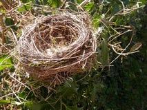 Ninho dos pássaros em Bush fotos de stock