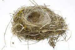 Ninho dos pássaros no fundo branco Fotos de Stock Royalty Free
