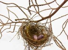 Ninho e ovos do pássaro no fundo branco Fotografia de Stock Royalty Free