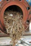 Ninho industrial do pássaro fotos de stock royalty free