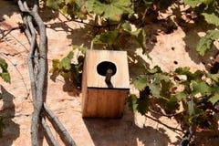 Ninho para pássaros Foto de Stock