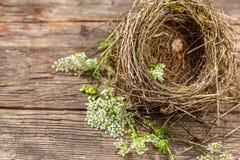 Ninho pequeno bonito do ` s do pássaro no fundo de madeira foto de stock