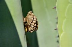 Ninho pequeno das vespas fotografia de stock