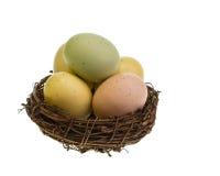 Ninho pequeno do pássaro completamente de ovos coloridos Fotos de Stock