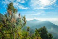 Ninho Processionary nas montanhas Fotos de Stock