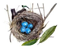 Ninho selvagem em um coto de árvore com ovos azuis Imagem de Stock Royalty Free