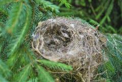 Ninho vazio de um pássaro Foto de Stock Royalty Free