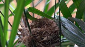 Ninho vazio do pássaro na árvore vídeos de arquivo