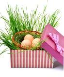 Ninho verde com os ovos na caixa de presente Fotografia de Stock