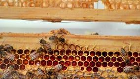 Ninhos, abelhas e mel filme