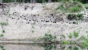 Ninhos das andorinhas na areia As andorinhas voam em filme
