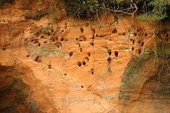 Ninhos do pássaro em penhascos Foto de Stock Royalty Free