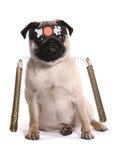 Ninja-Karate Pug Stockfotografie