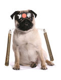 Ninja karate pug Stock Photography