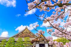 Ninomaru宫殿,京都,日本在春天 免版税库存照片