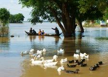 Niño, barco de fila, pato, campo vietnamita Imagen de archivo