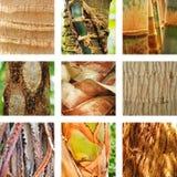 Nio delar av palmträd Arkivbild