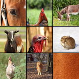 Nio djur från lantgården Royaltyfria Foton