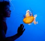 Niño en el acuario Foto de archivo