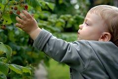 Niño en el jardín Fotos de archivo