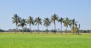 Nio kokospalmer arkivfoto