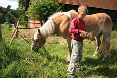 Niño y caballo Haflinger Foto de archivo libre de regalías