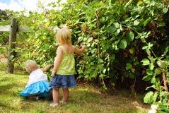 Niños de la zarzamora Imagen de archivo libre de regalías
